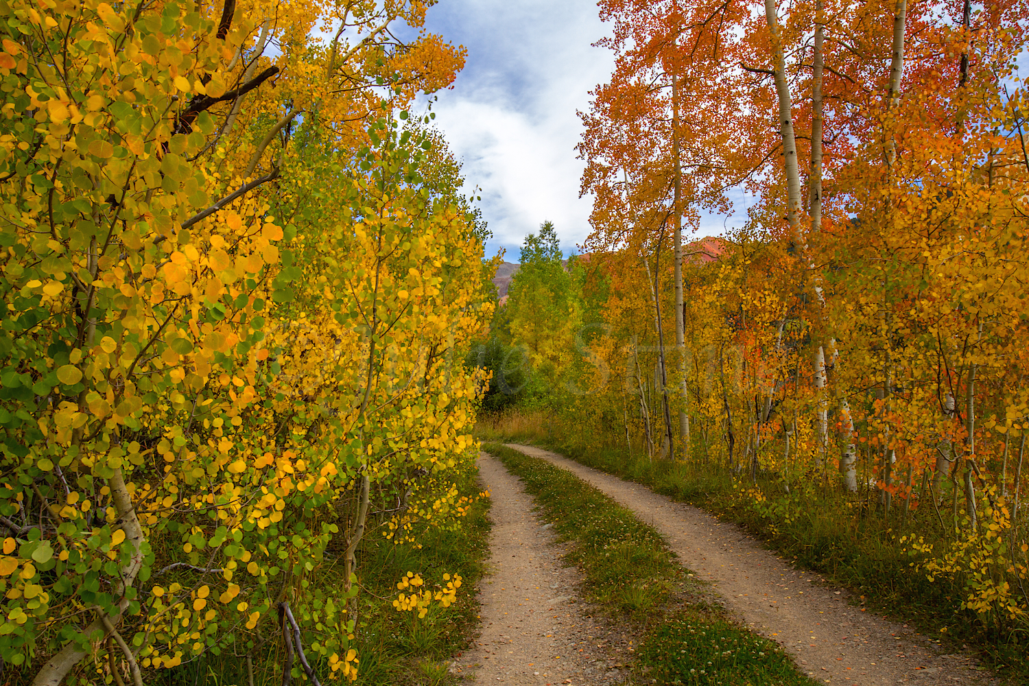 Red Mountain Fall Color, Image #9925