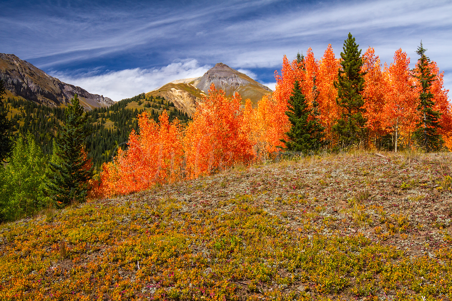 Red Mountain Fall Color, Image #9903