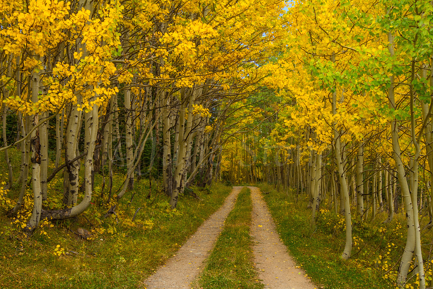 Red Mountain Fall Color, Image #9940
