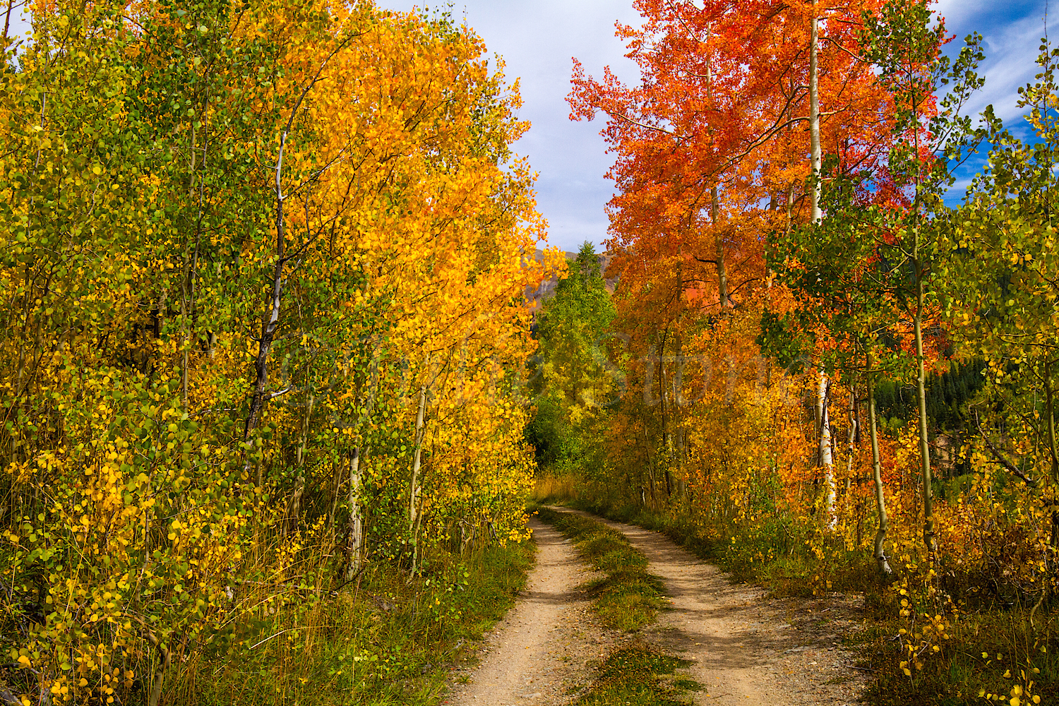Red Mountain Fall Color, Image #9981