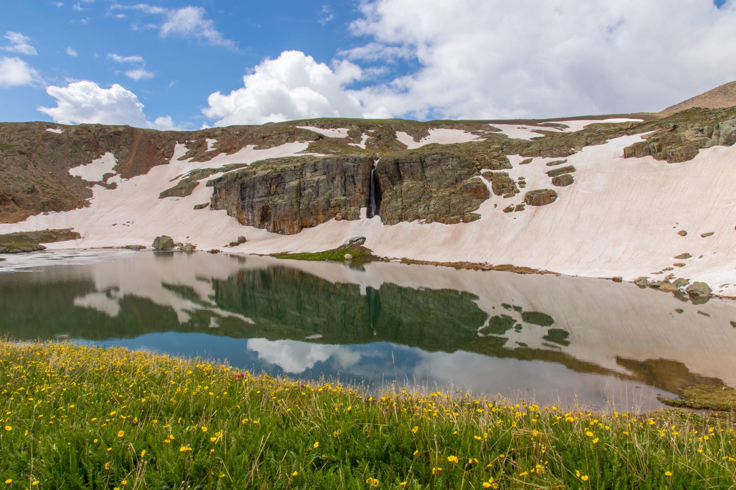 Wildflowers at Bullion King Lake, Image #JS_5748
