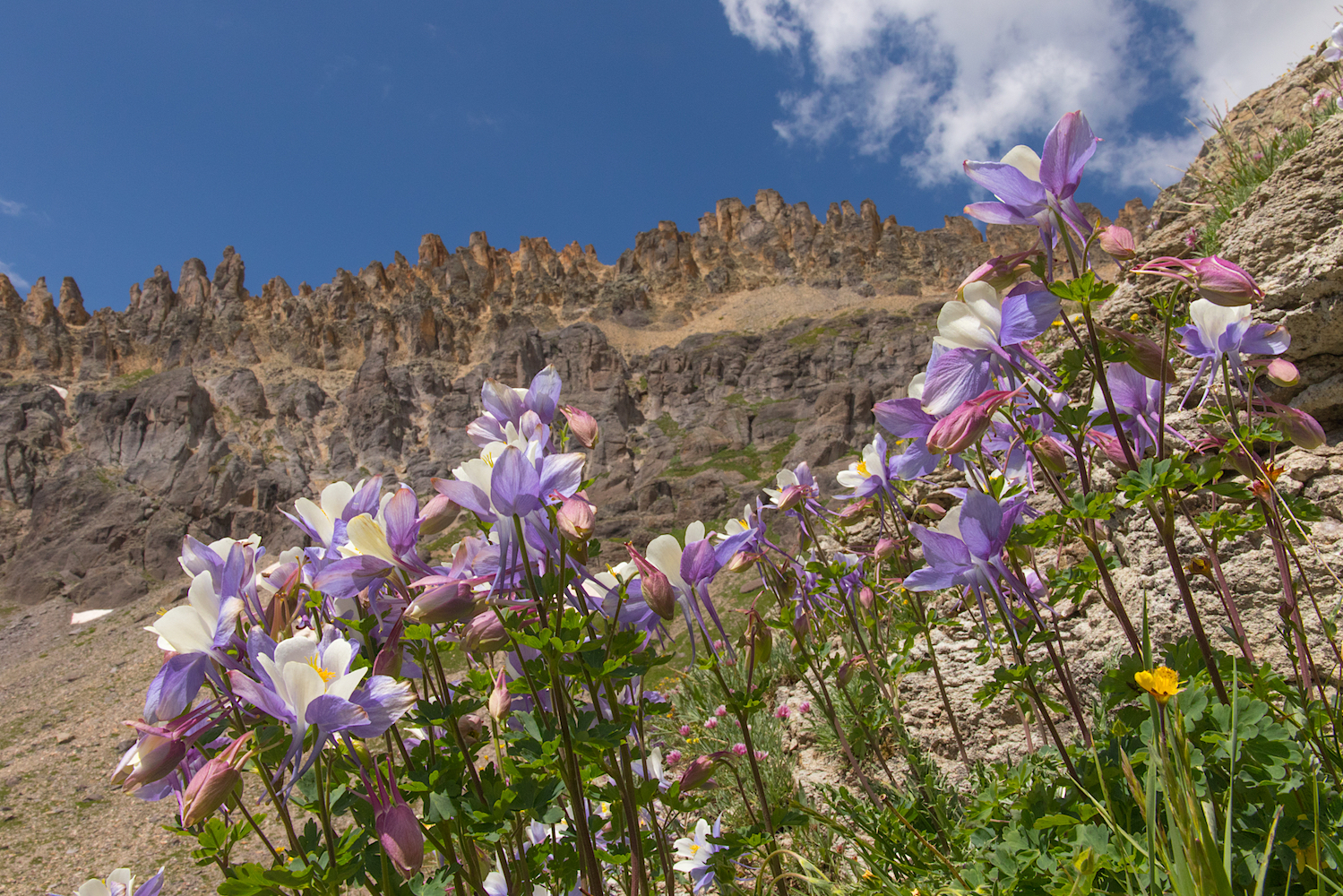Governors Basin, Image #JS2_4196