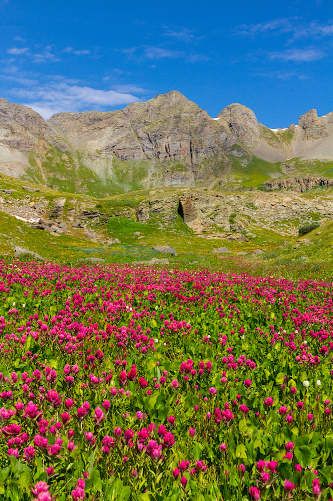 Clear Lake Wildflowers, Image # 3686