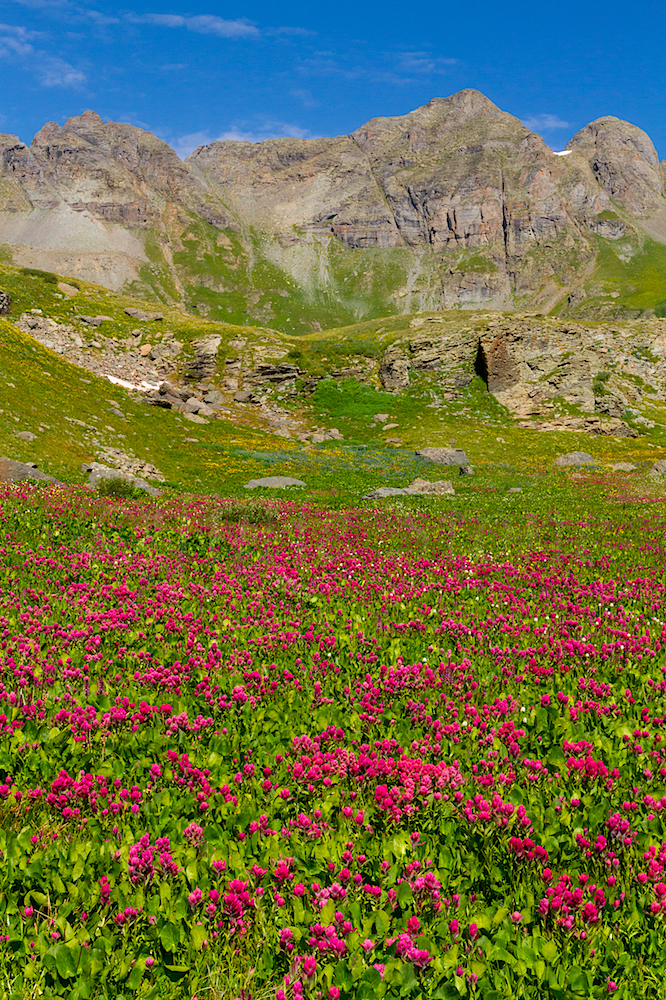 Clear Lake Wildflowers, Image # 3744