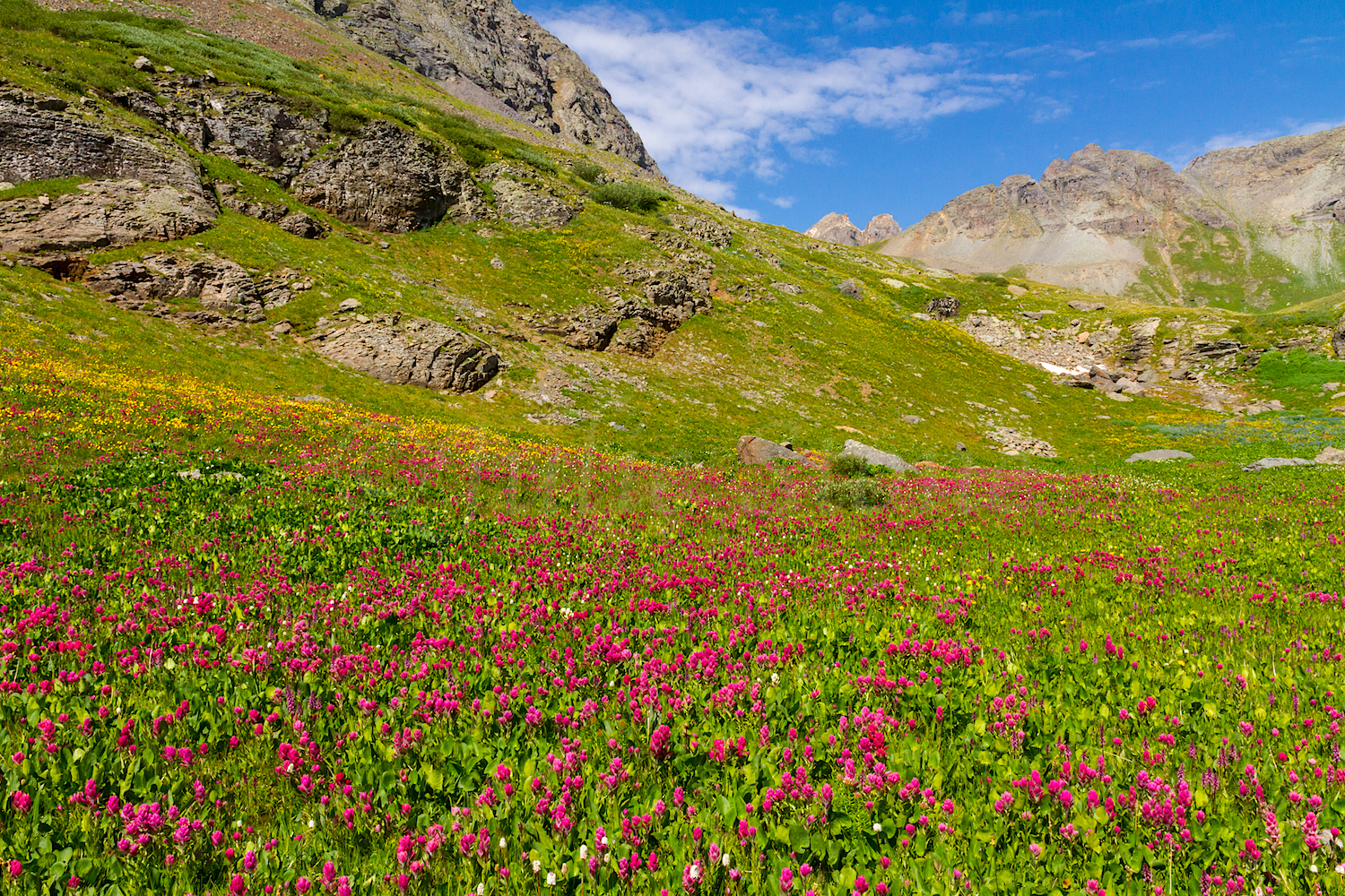 Clear Lake Wildflowers, Image # 3750