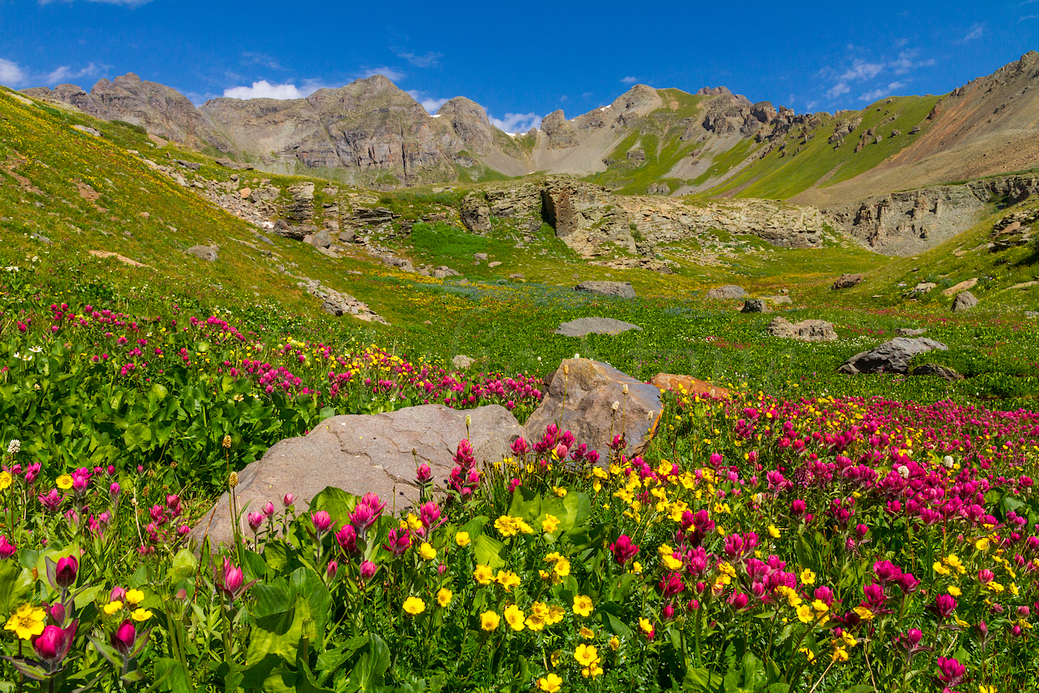 Clear Lake Wildflowers, Image # 3793