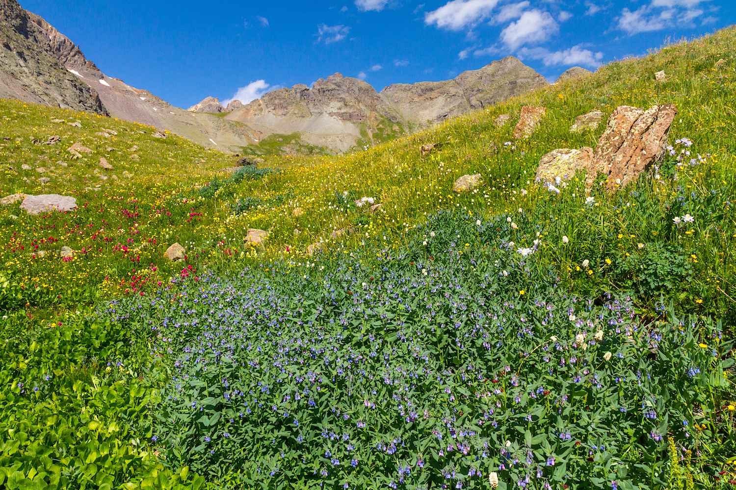 Clear Lake Wildflowers, Image # 3876
