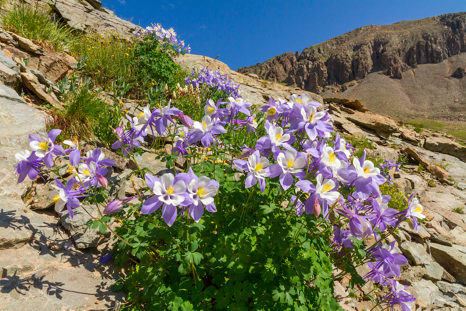 Clear Lake Wildflowers, Image # 3872