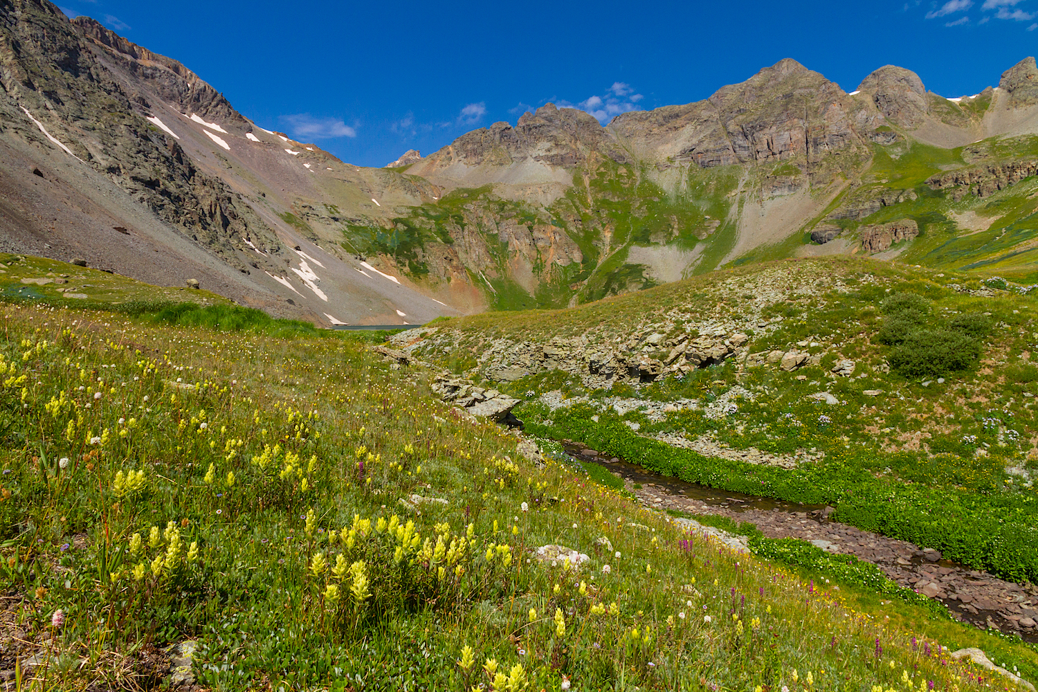 Clear Lake Wildflowers, Image # 3891