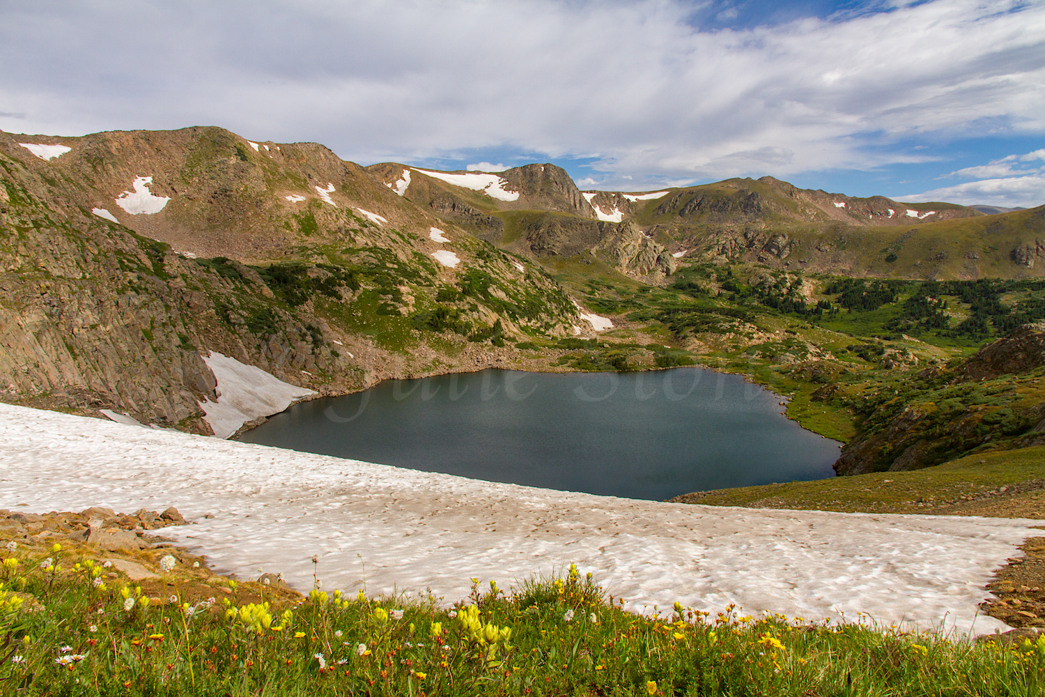 Yellow Paintbrush and Snowfield above King Lake, Image # 9669
