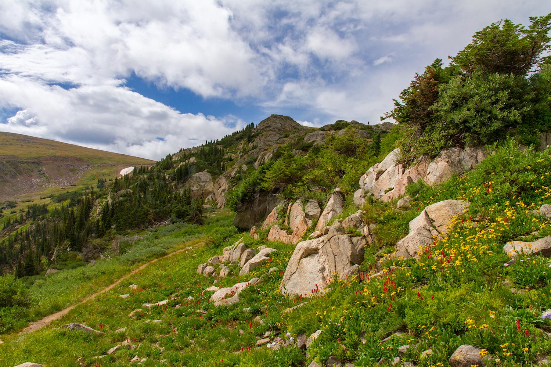 Wildflowers along trail to Betty & Bob Lake, Image # 9913