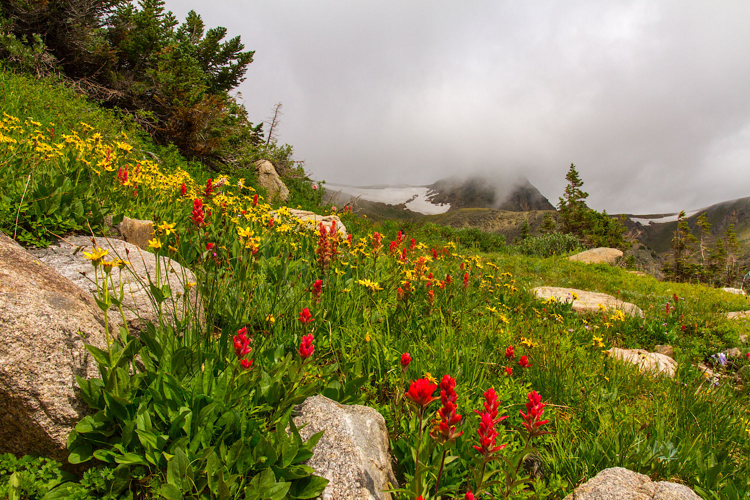 Wildflowers along trail, Image # 9892