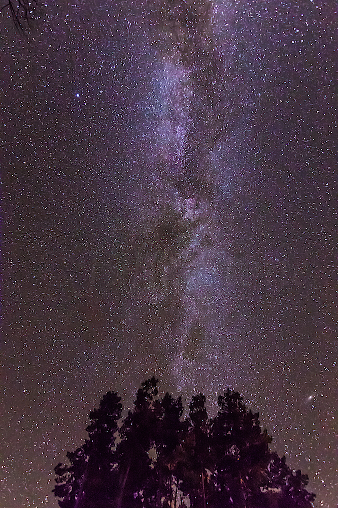 Milkyway above trees of Durango House, Image # 6709