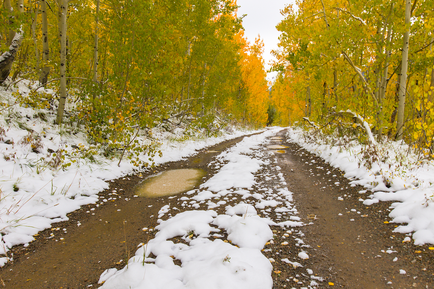 Snowy Fall Day, Image # 0679