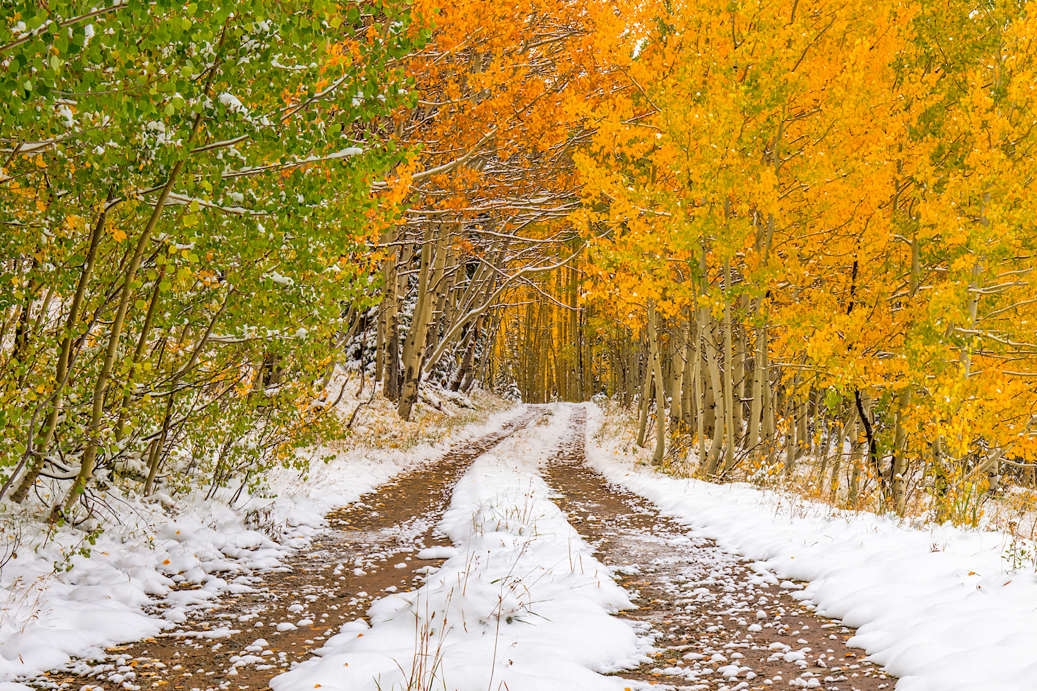 Snowy Fall Day, Image # 0696