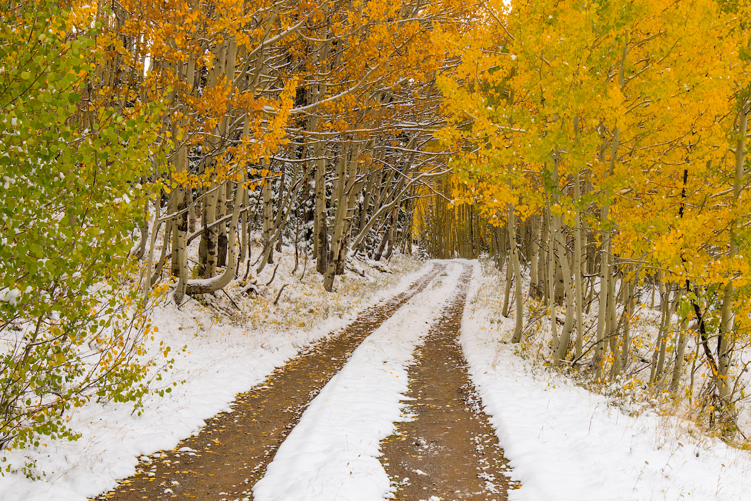 Snowy Fall Day, Image # 0802