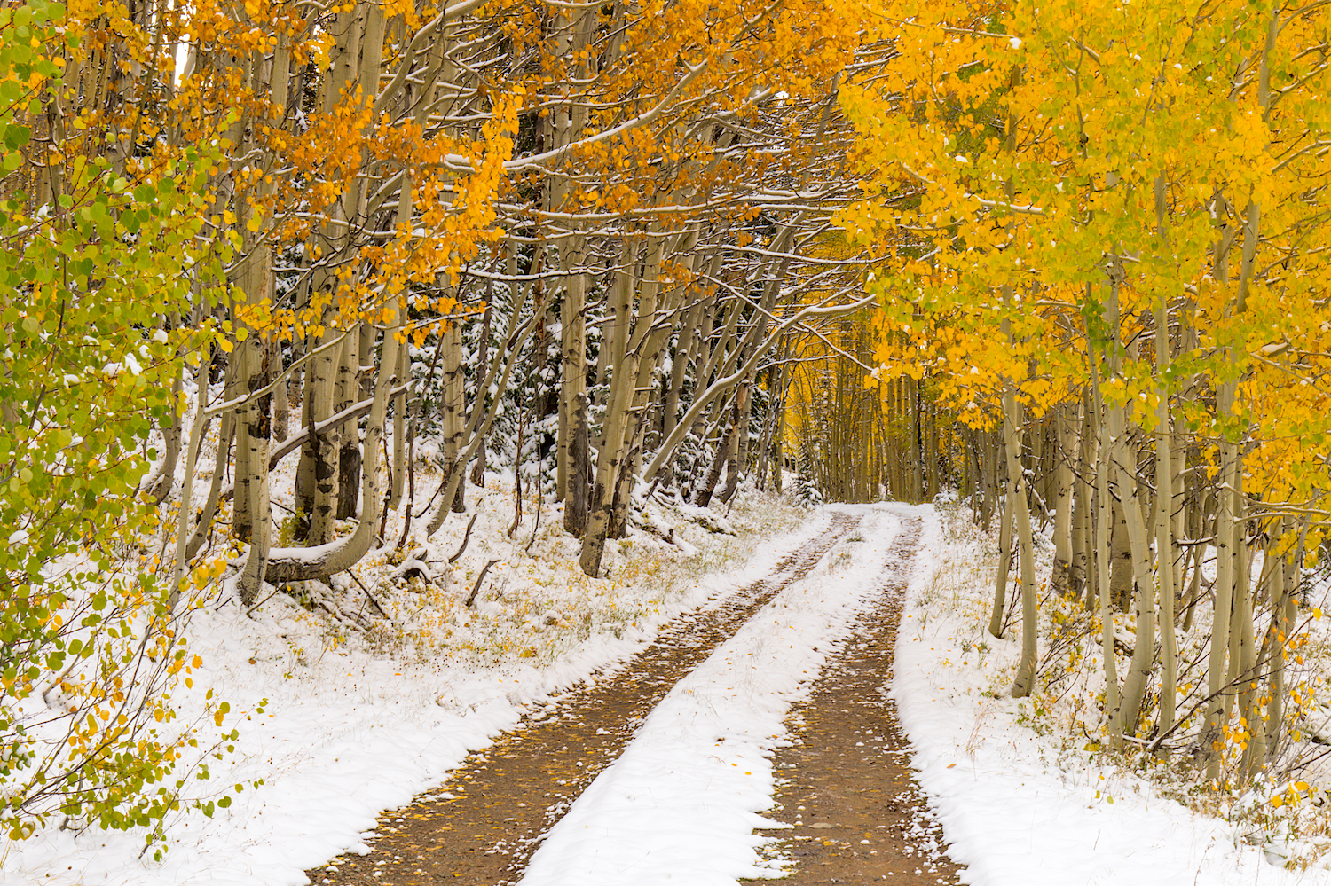 Snowy Fall Day, Image # 0818