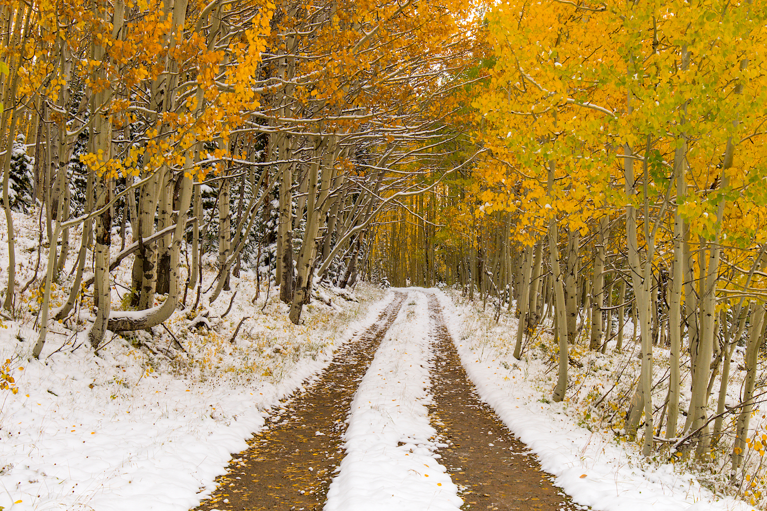 Snowy Fall Day, Image # 0852