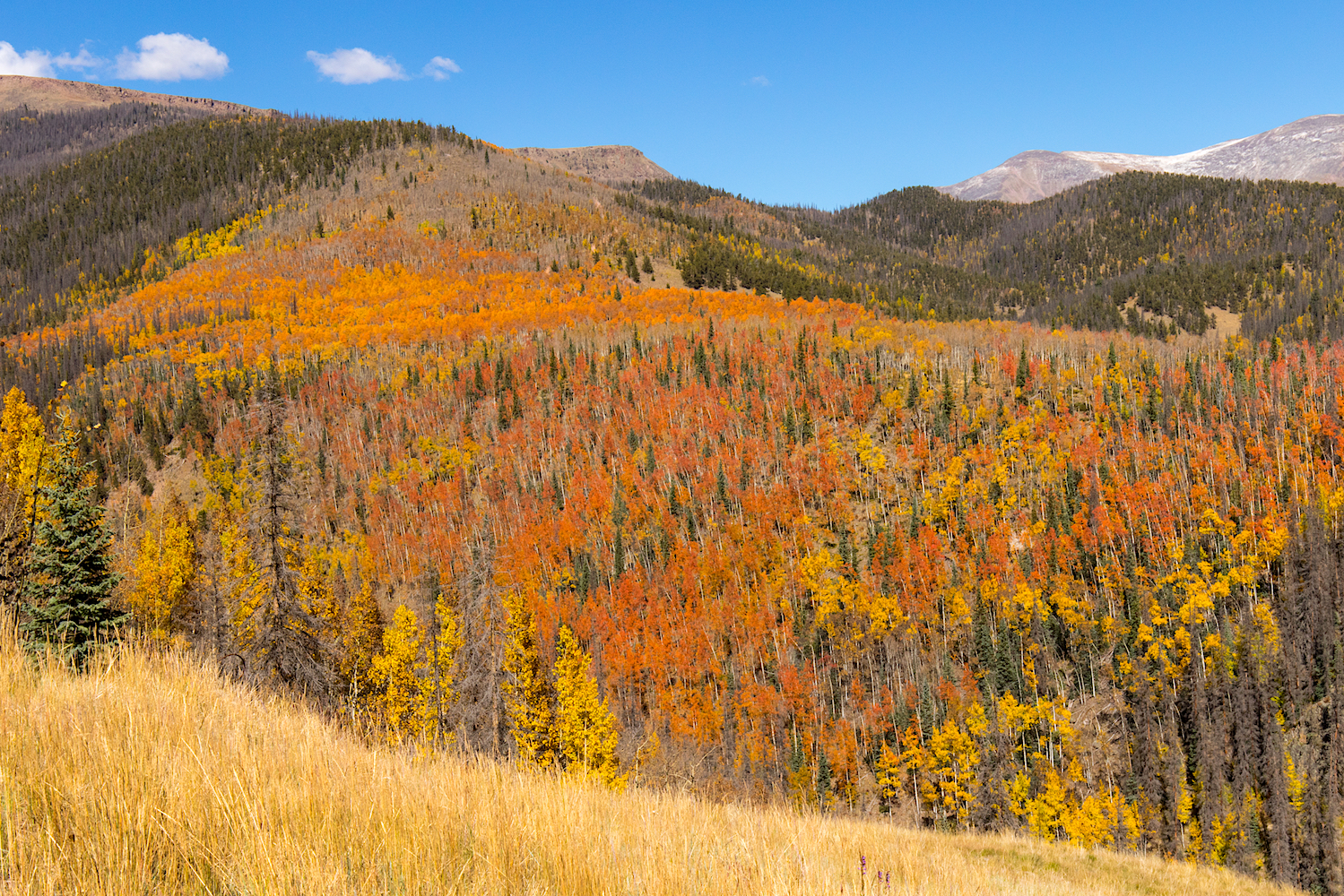 View of Fall Colors from Last Chance Mine, Image # 4109
