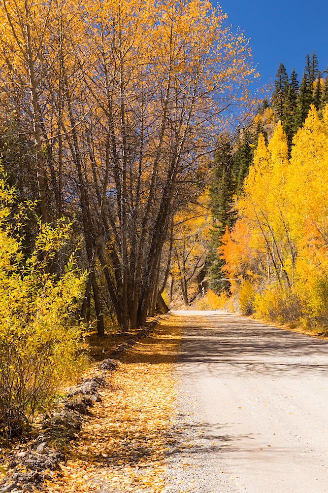 Alpine Loop Fall Colors, Image # 5916