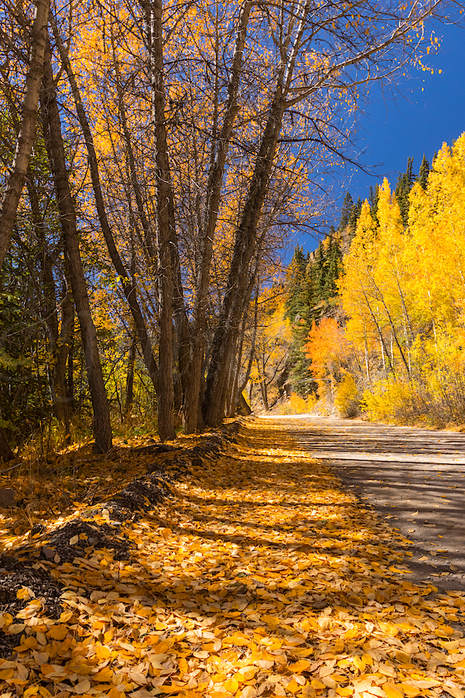 Alpine Loop Fall Colors, Image # 5937