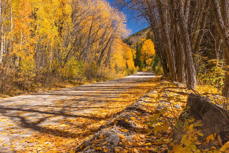Alpine Loop Fall Colors, Image # 5970