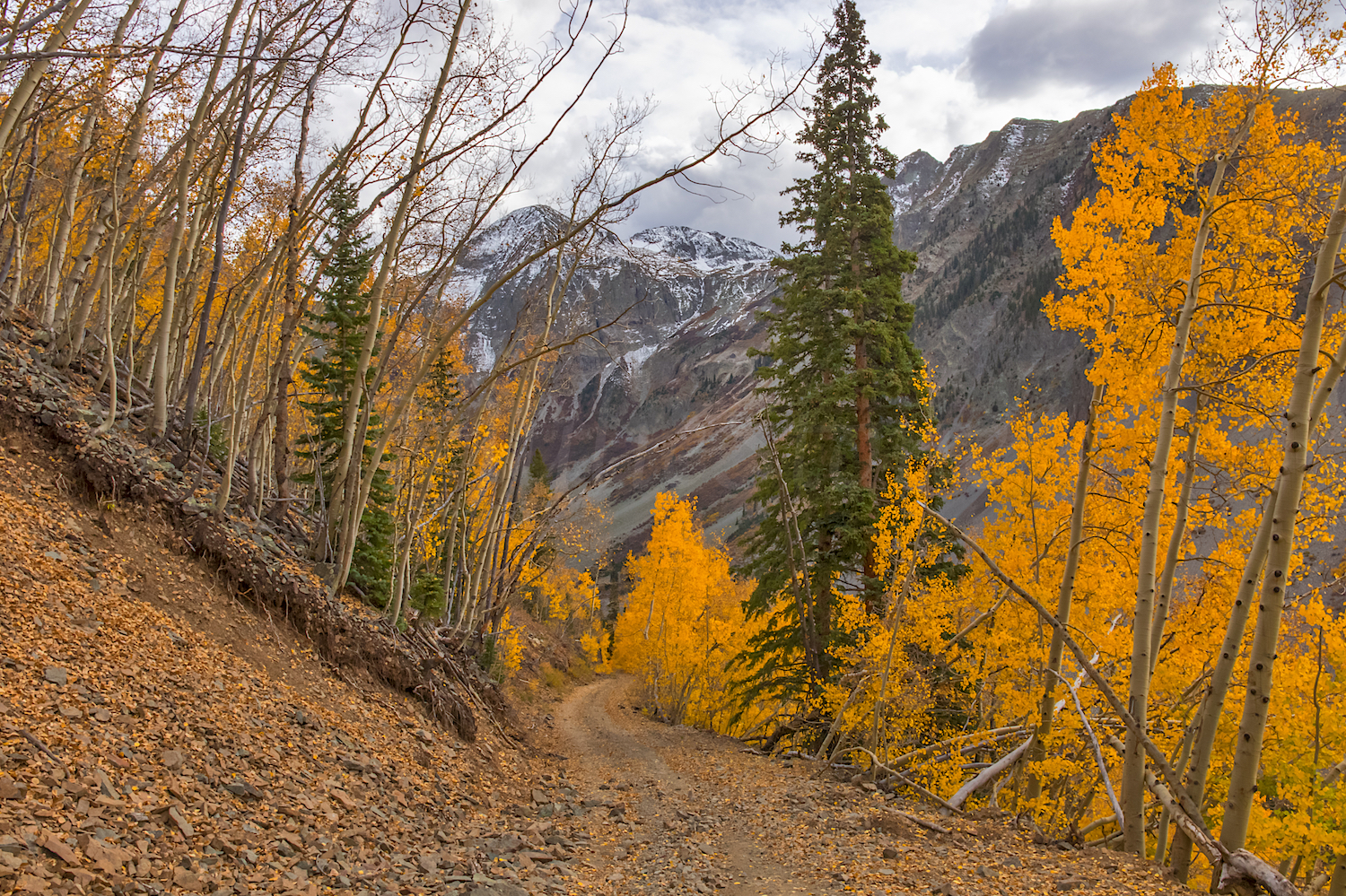 Road to Little Giant Basin, Image # 9005