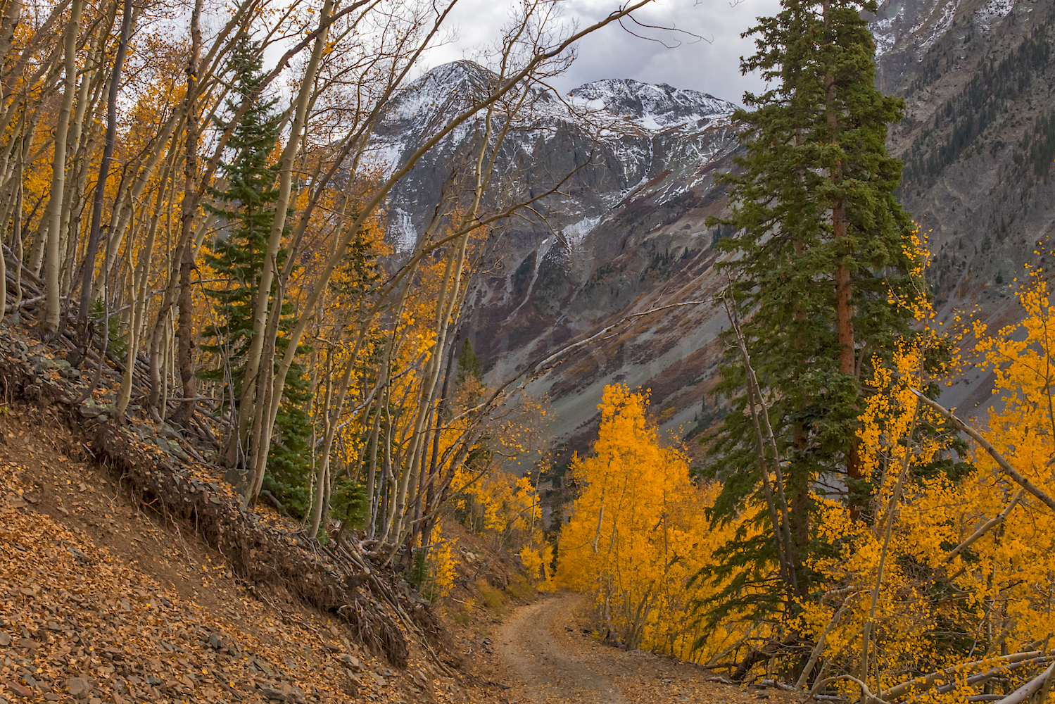 Road to Little Giant Basin, Image # 9008