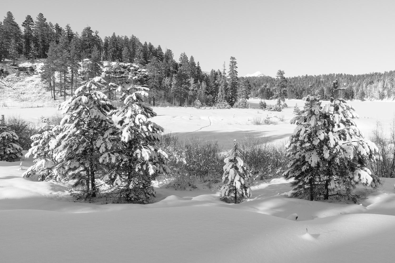 Haviland Lake Snowshoe, Image # 2056