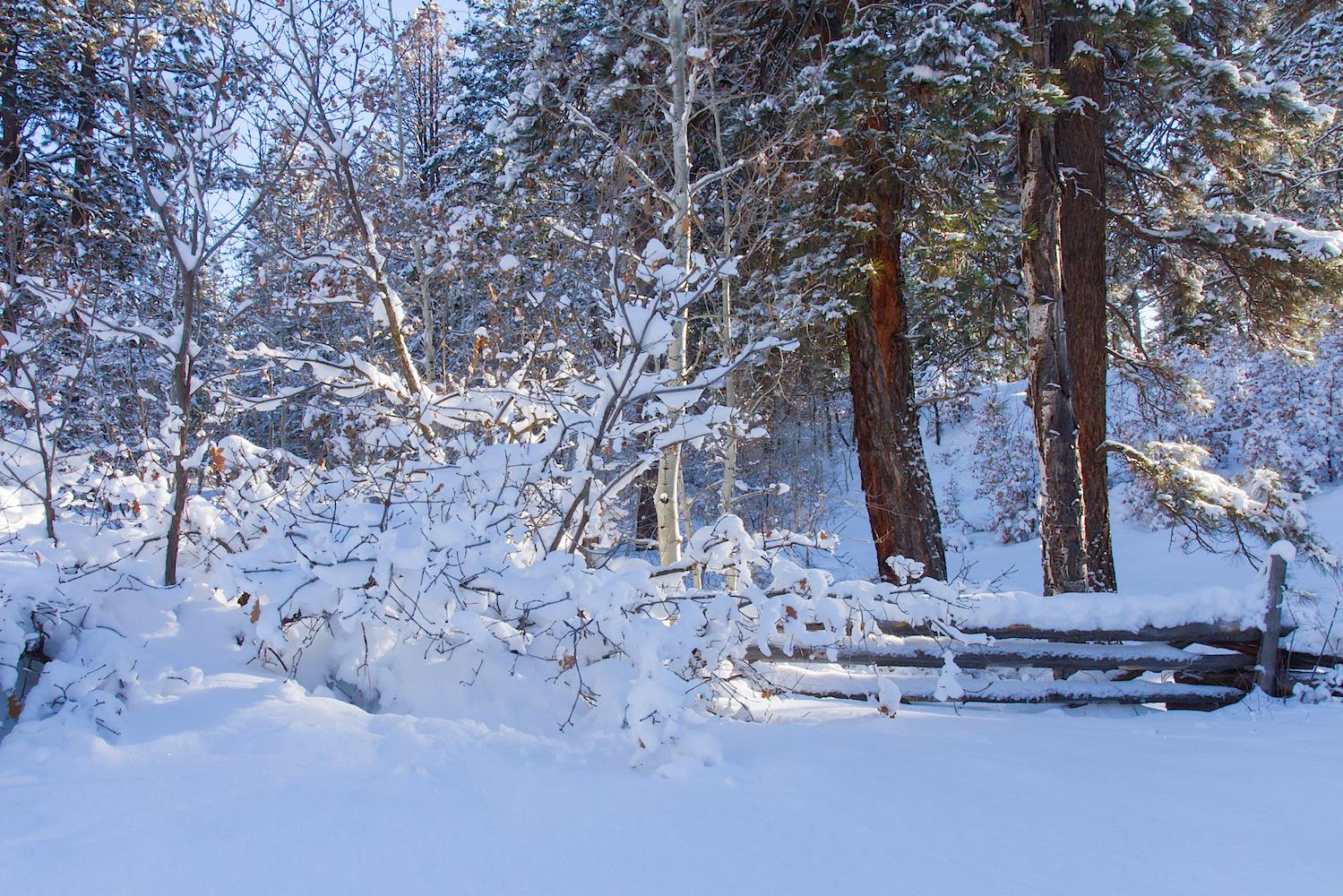 Haviland Lake Snowshoe, Image # 2066