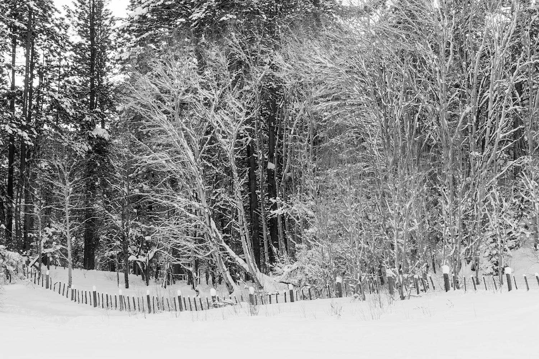 Haviland Lake Snowshoe, Image # 2258