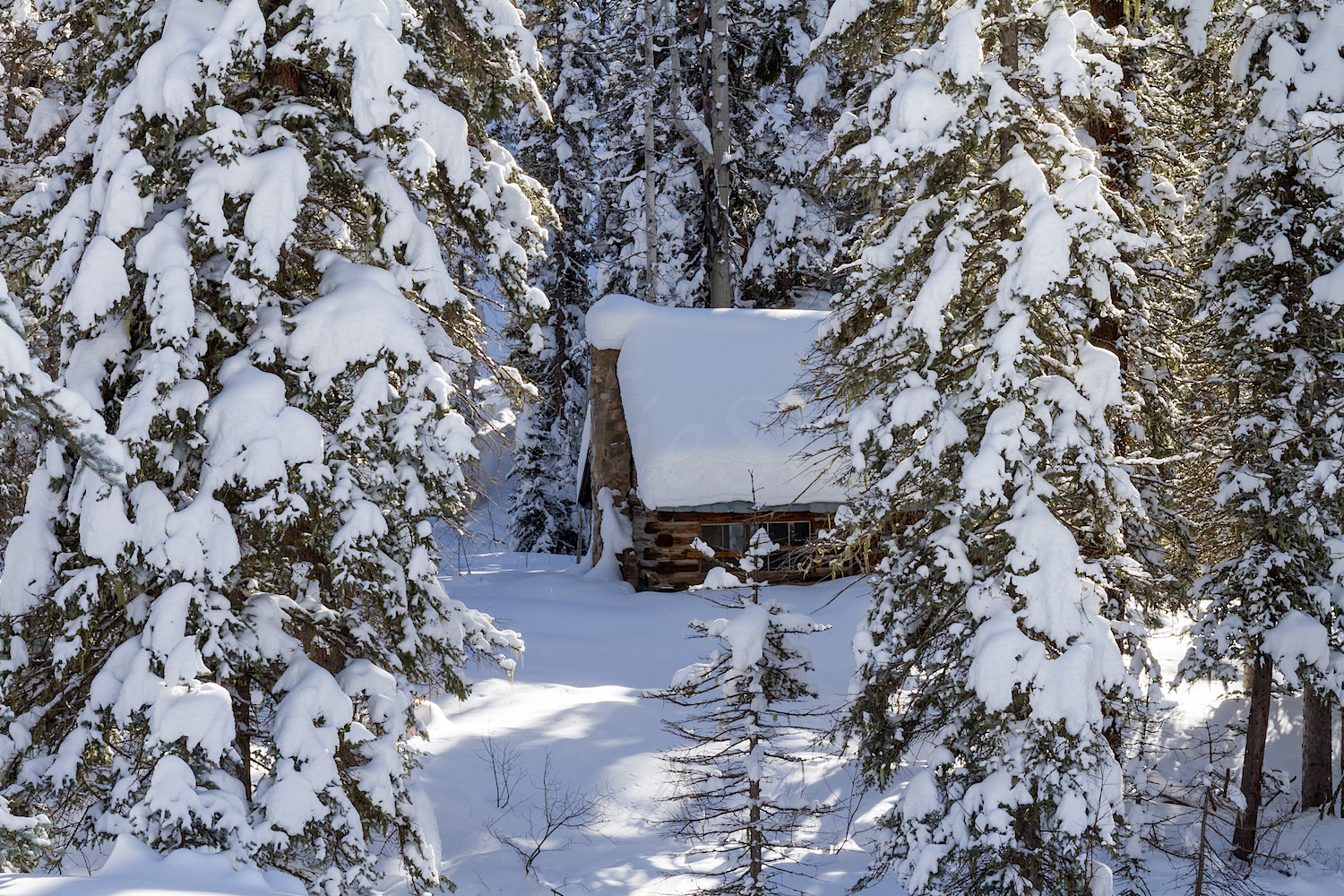 Little Cabin in the Woods, Image # 2307