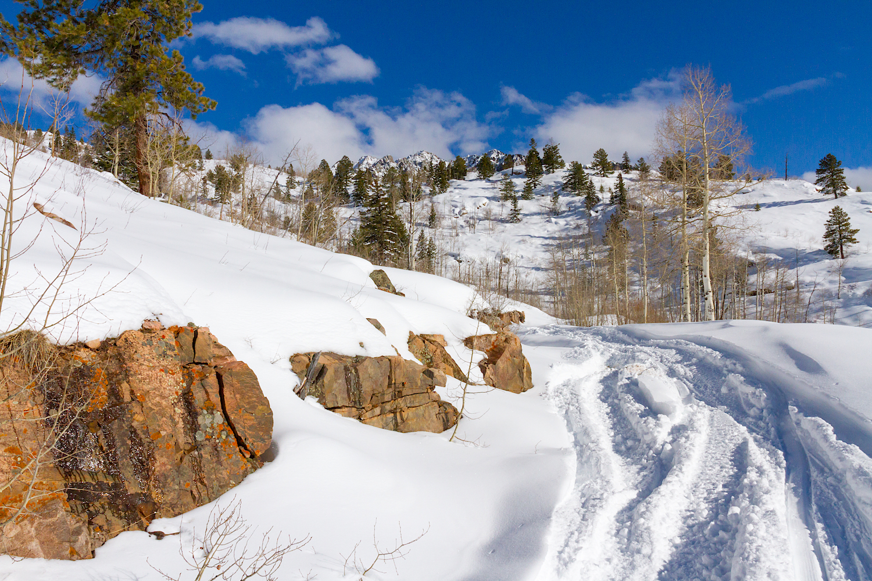 Lime Creek Snowshoe, Image # 2541