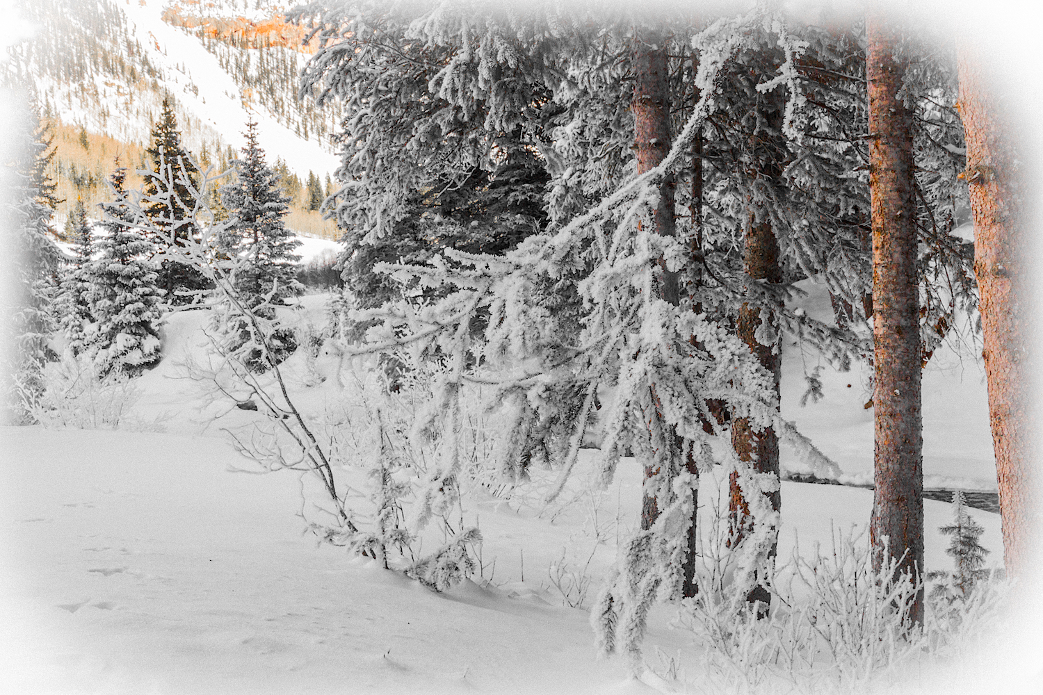 South Mineral Snowshoe, Image # 3099
