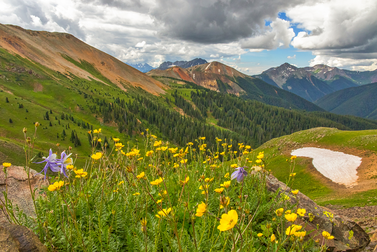 Red Mountain wildflowers