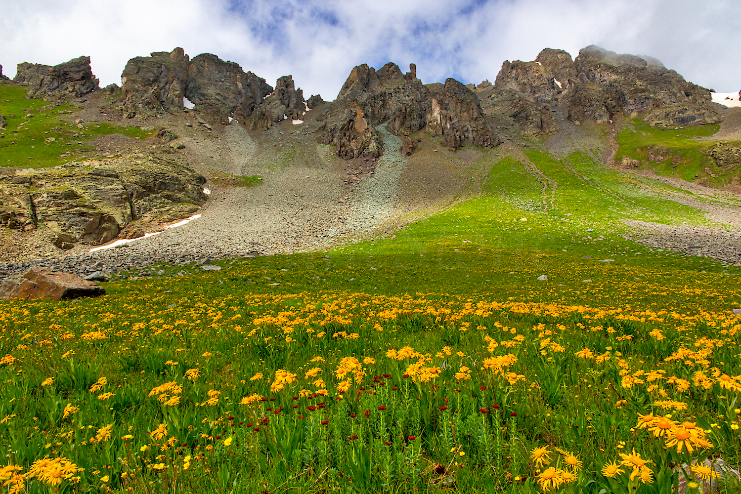 Paradise Basin Field of wildflowers