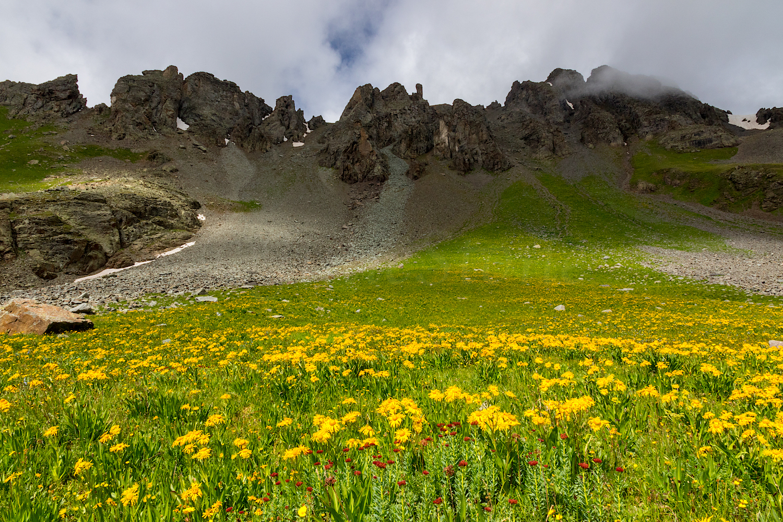 Wildflowers in Paradise Basin