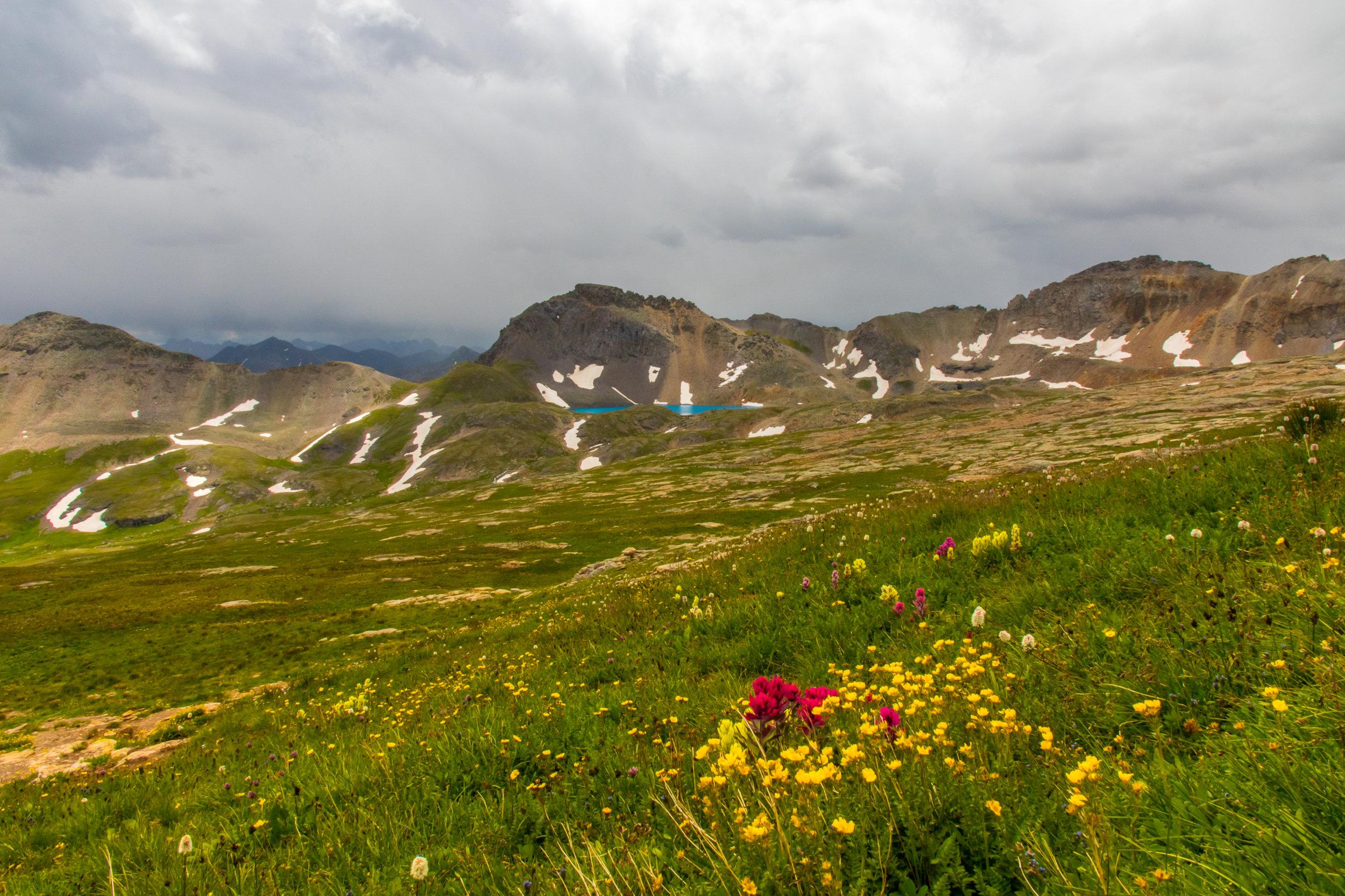 Wildflowers on trail toward Columbine Pass and Lake