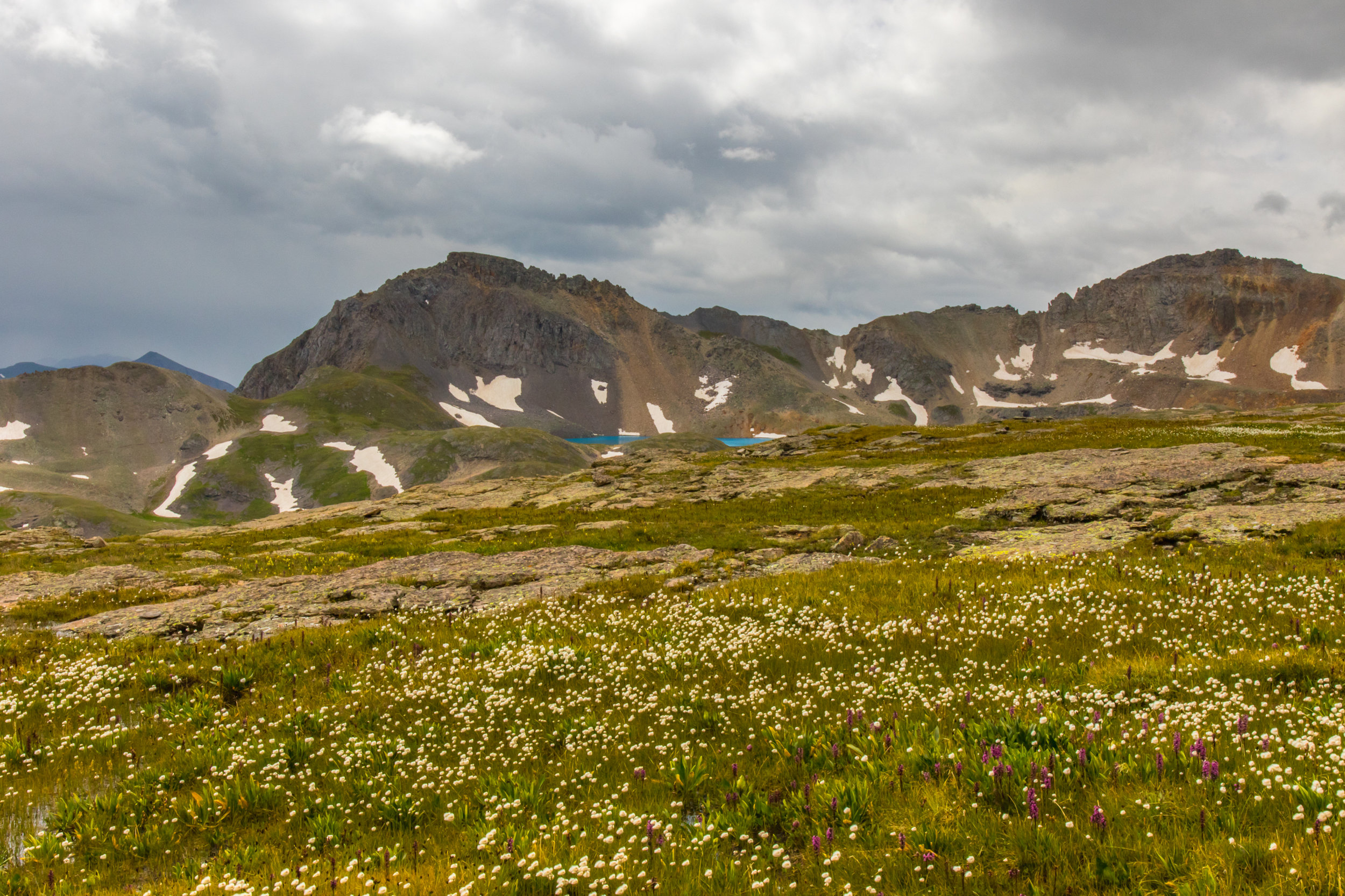 Wildflowers along the route