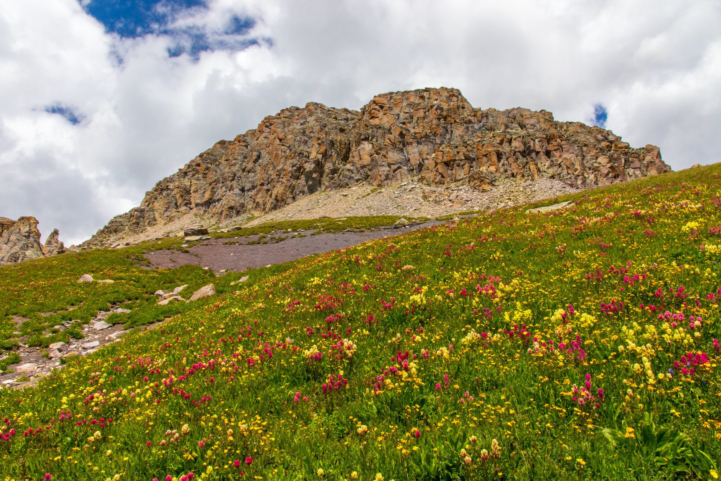 Wildflowers along the route to Columbine Pass & Lake