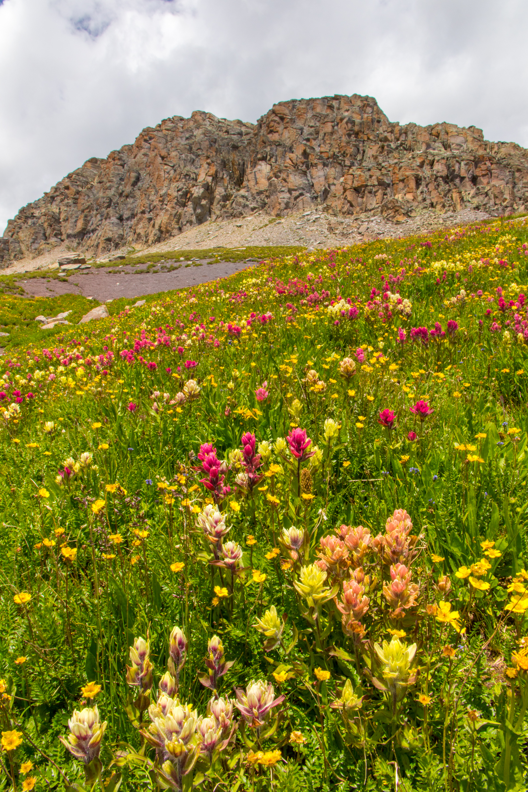 Multi-colored paintbrush along the route