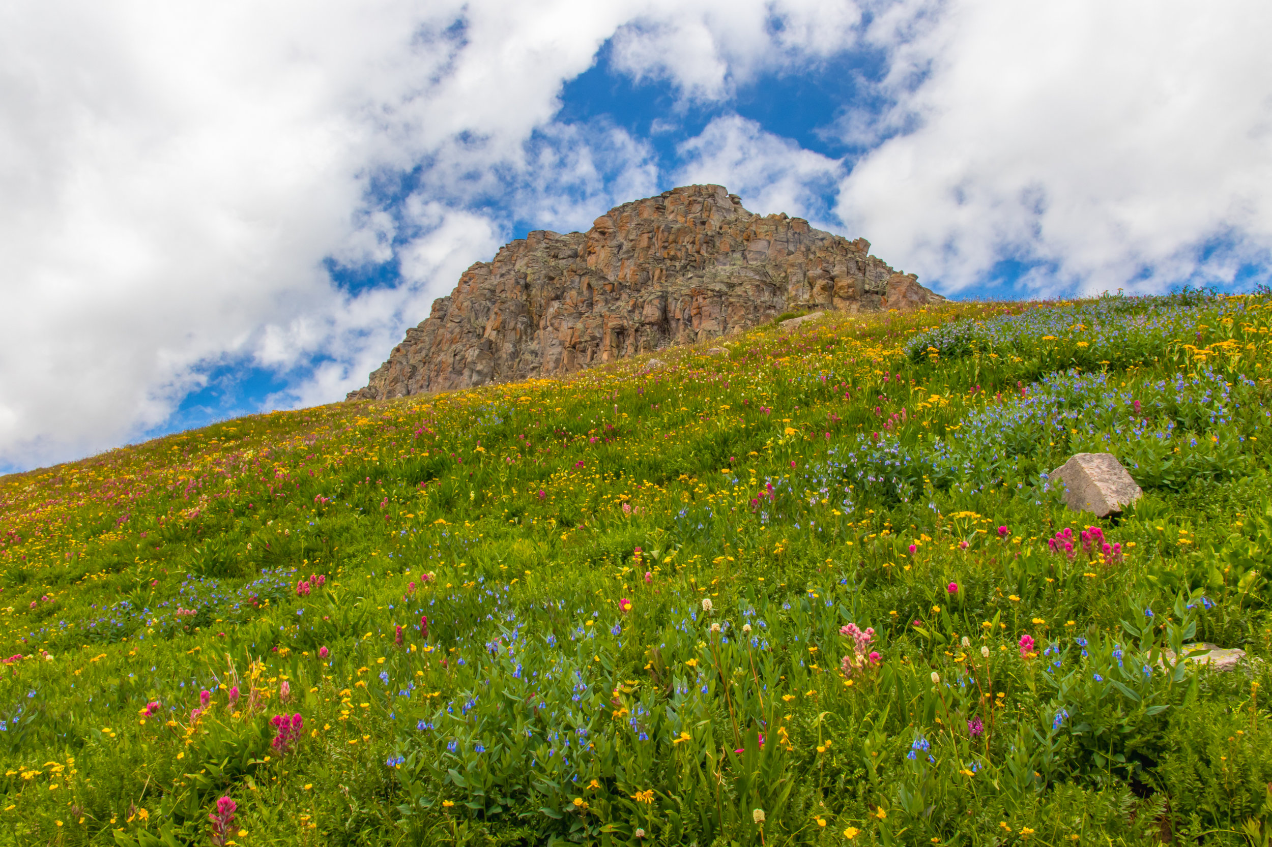 Field of Wildflowers along the route