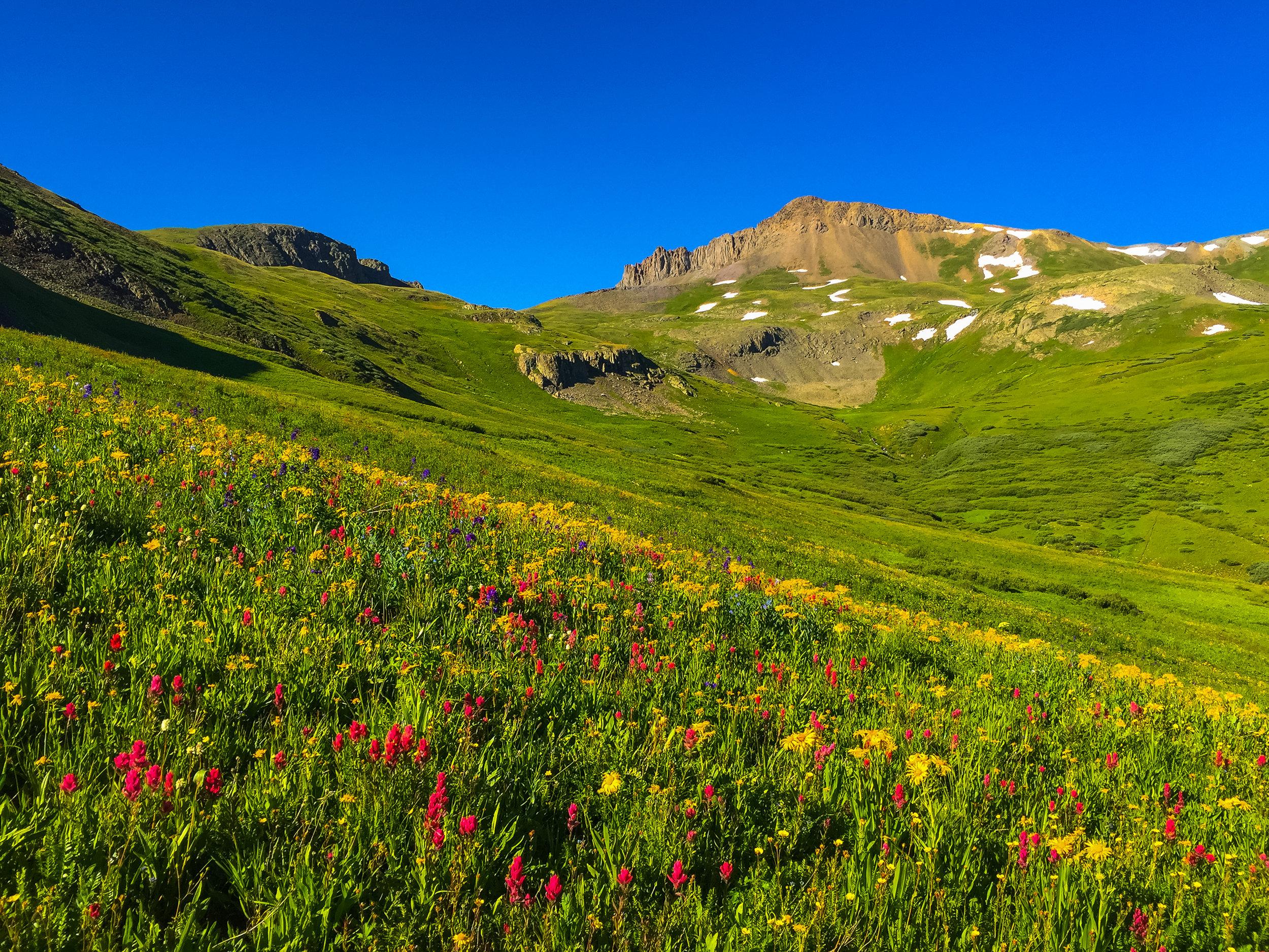 Maggie Gulch Wildflowers