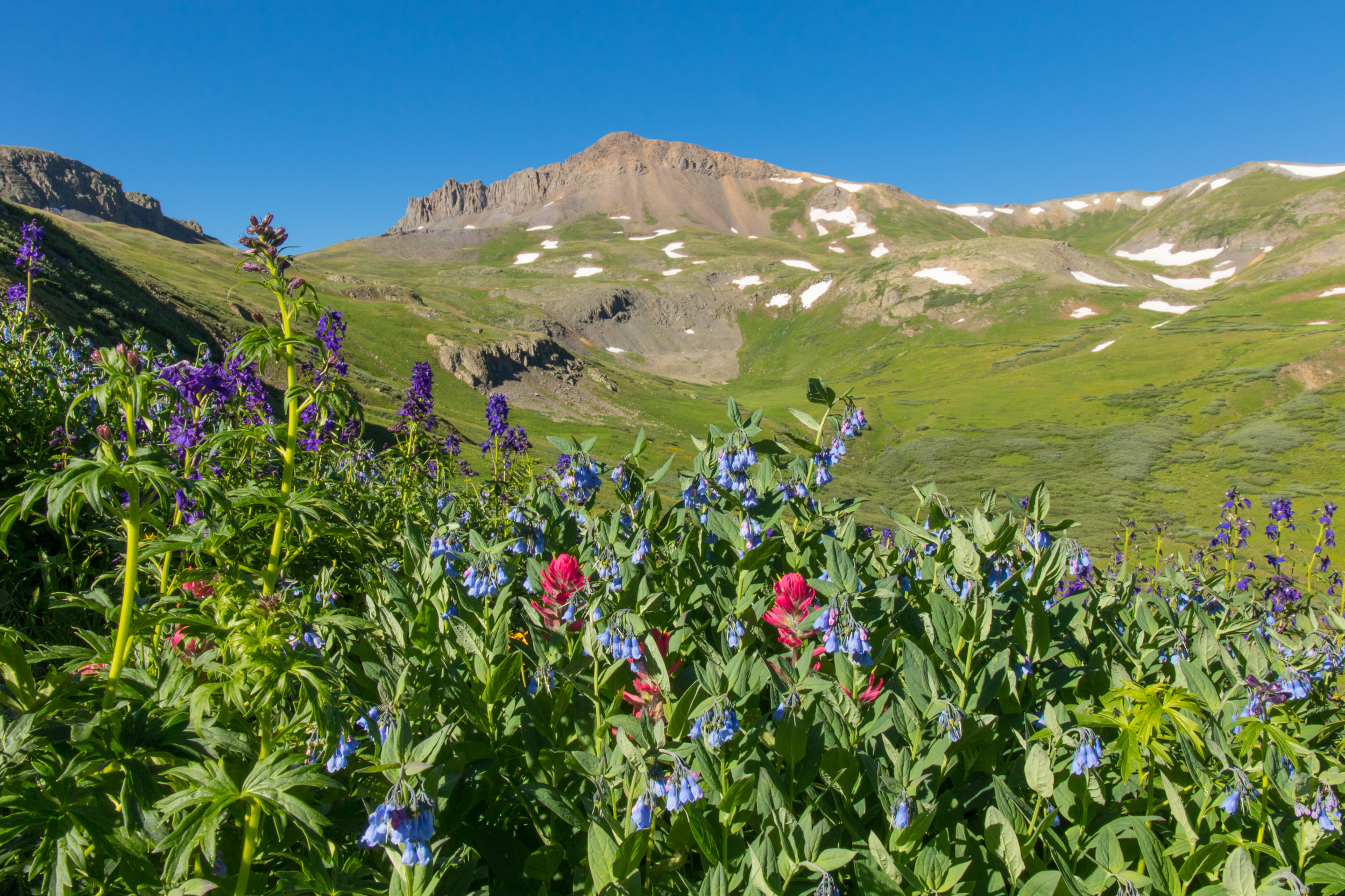 Bluebells, Larkspur and Paintbrush fill the gulch