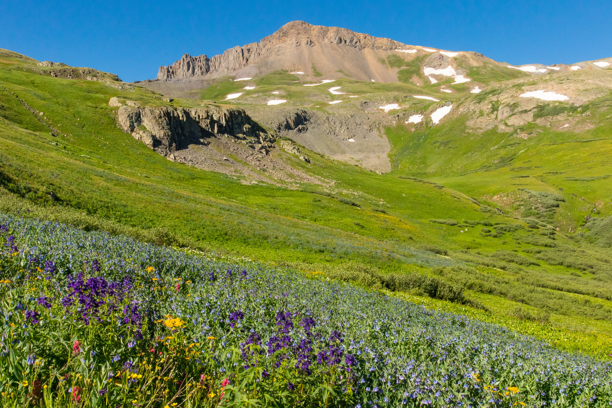 Candy Mountain with larkspur and bluebells