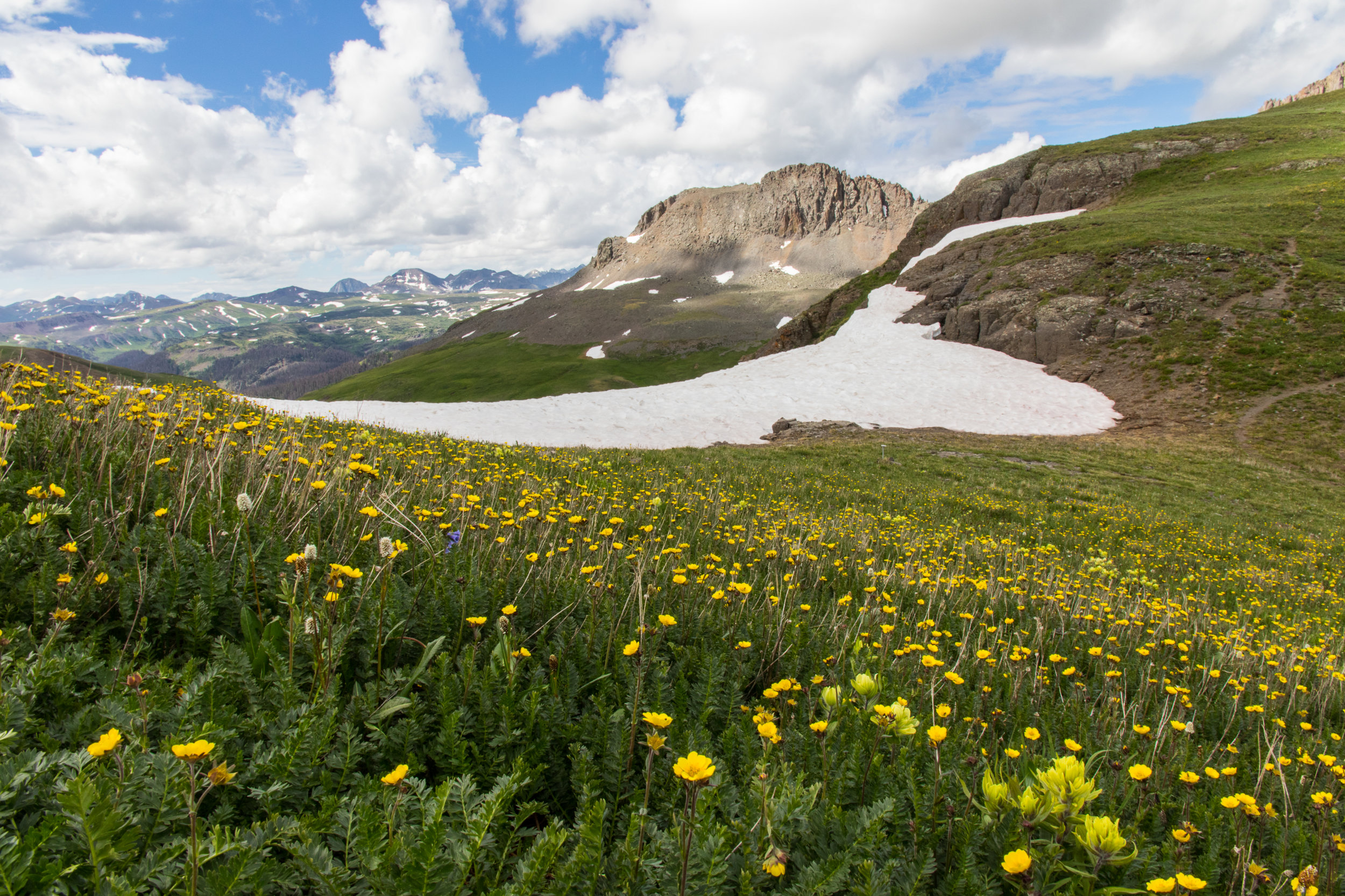 Combination of Snow and Wildflowers on the trail