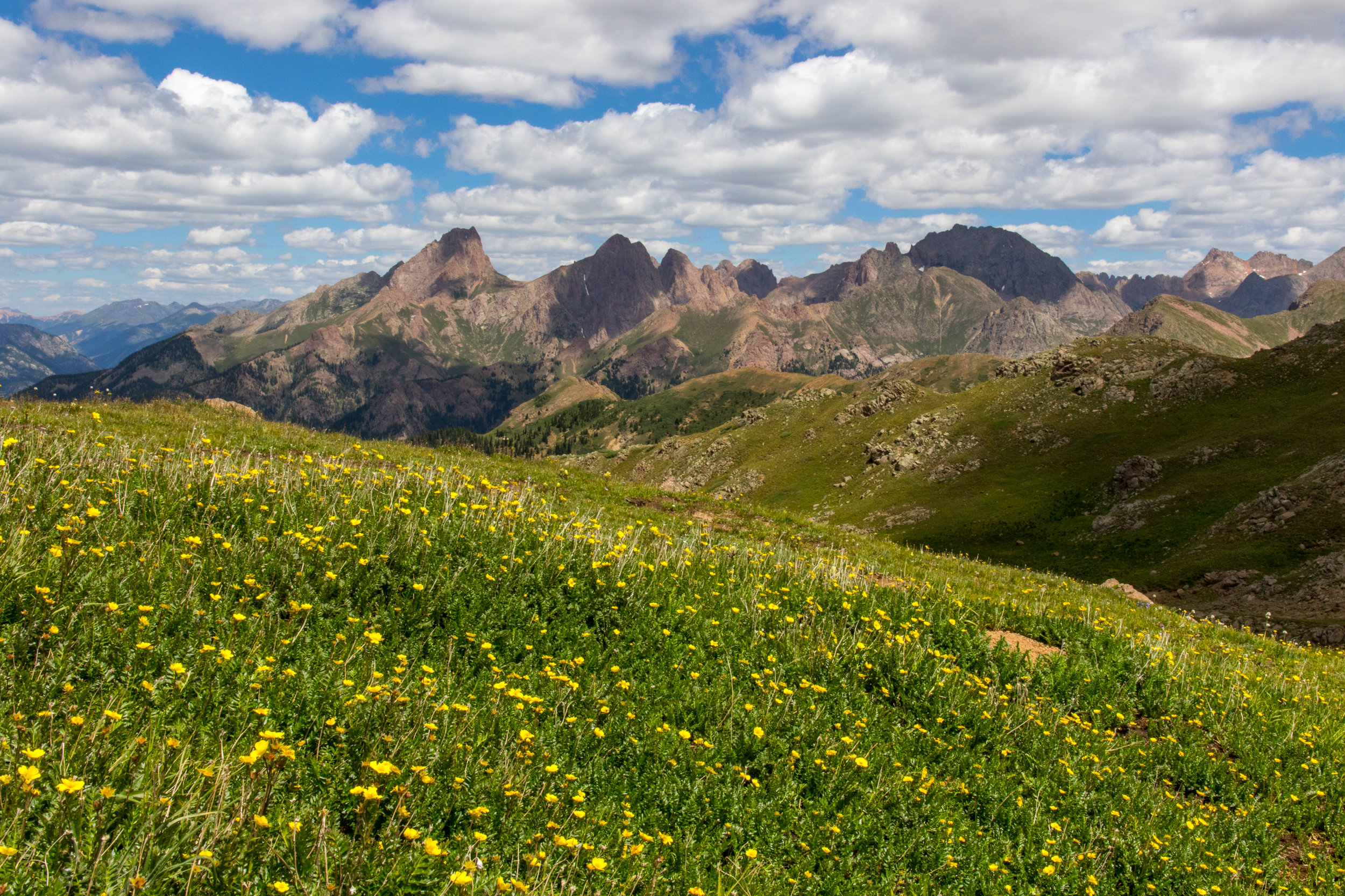 Ridge covered with Wildflowers