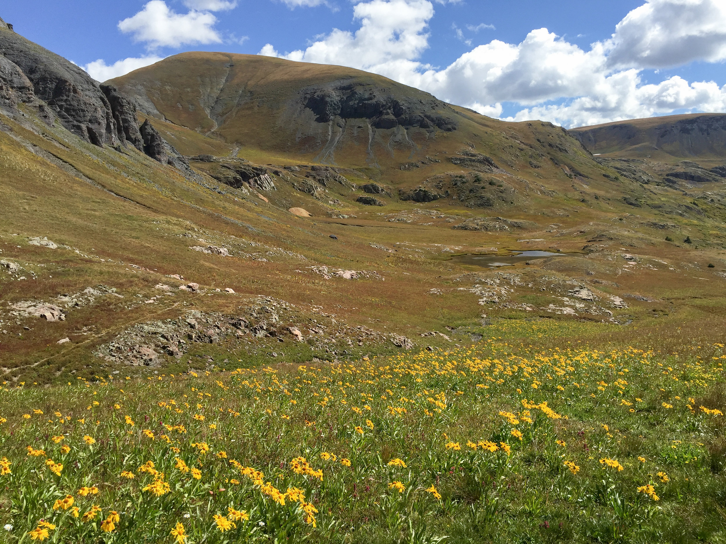 Hard to believe there are still lots of wildflowers