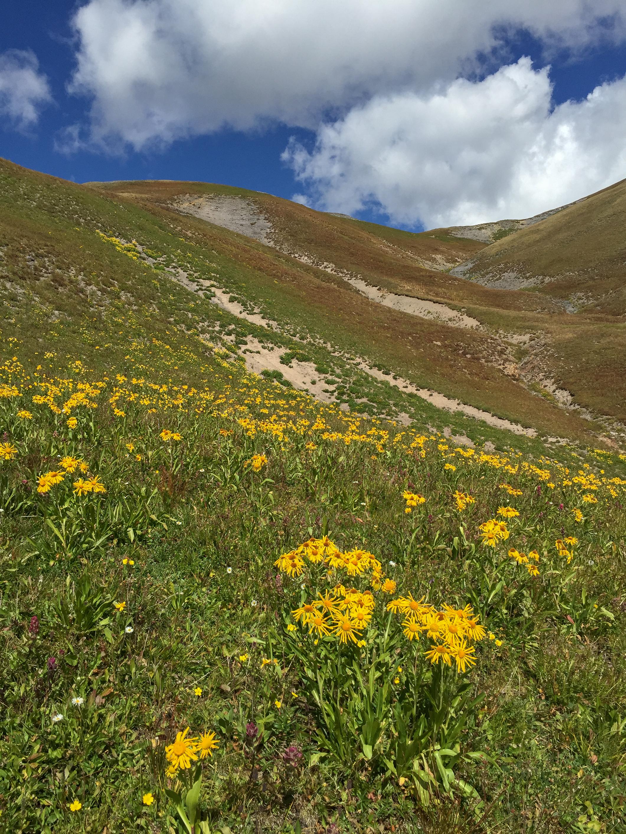 Wildflowers up the ridge