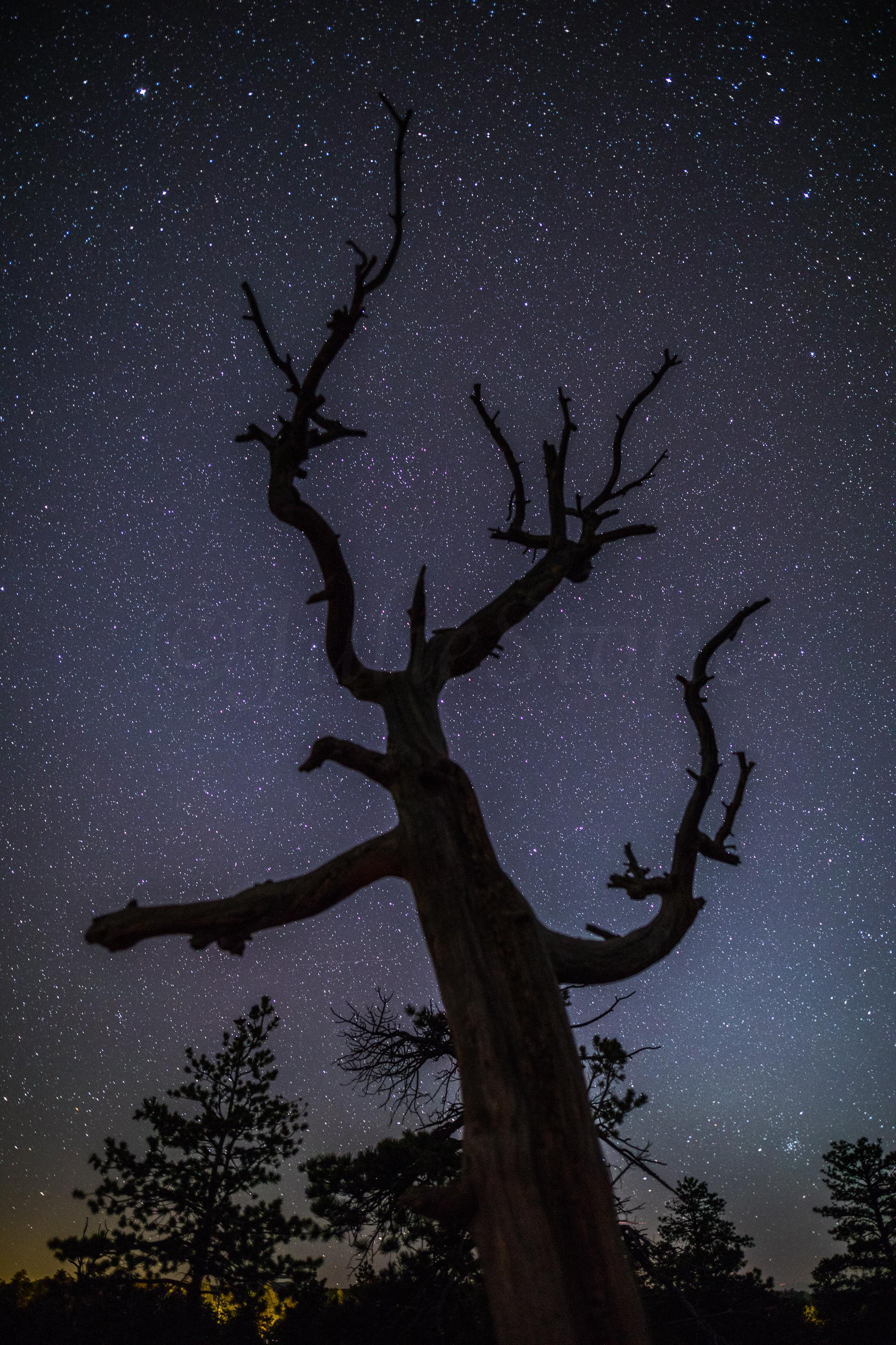 Bryce Canyon, Image # 0539